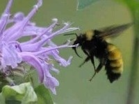 Native Plants for Beneficial Insects