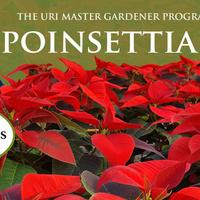 Cooperative Extension Poinsettia Presale for URI Community