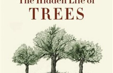 Book Discussion of The Hidden Life of Trees