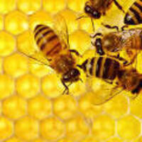 Ask an Urban Beekeeper