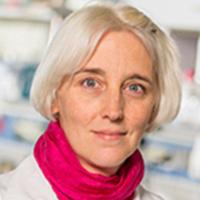 Medical Grand Rounds: Melanie Koenigshoff, MD, PhD
