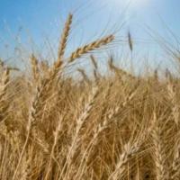 2018 Farm Bill  - New Decisions for Kansas Farmers