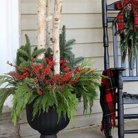 Winter Interest Patio Container