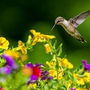 Attracting Hummingbirds to Your Yard Workshop