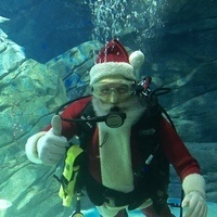 Holiday Dive Show