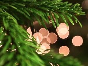 Lilburn Tree Lighting