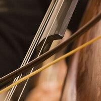 University Double Bass Studio