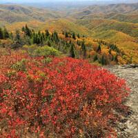 Blue Ridge Parkway, Transylvania County, North Carolina. Photo Credit: Alan Cressler