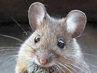 PCT Rodent Control Virtual Conference