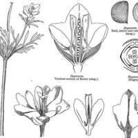 Basic Botany 2 day Workshop
