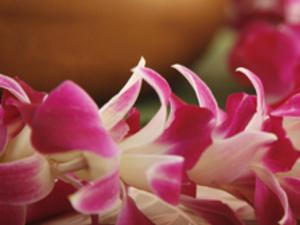 Pitt-Greensburg: Up All Night--Hawaiian