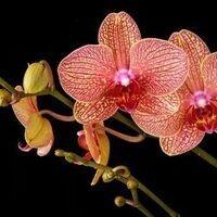 Orchid Care 101 Workshop
