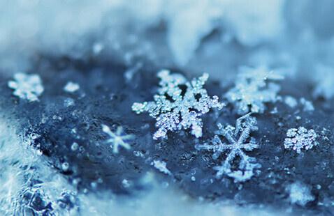 Winter Wonderland Holiday Party
