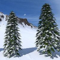 Winter Tree ID