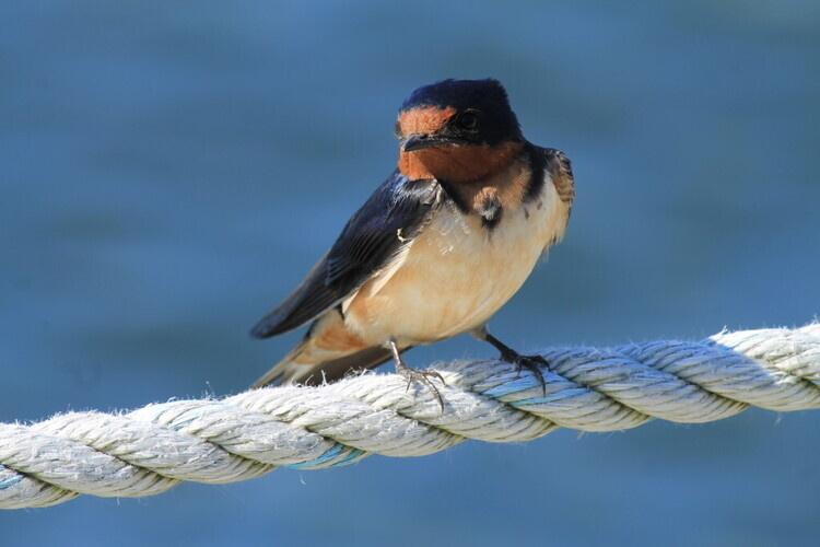 Late Fall Birding on the Barrier Beach