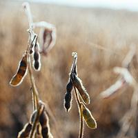 Soybean School - Salina