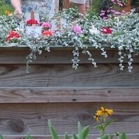 Raised Beds and Table Gardens Workshop