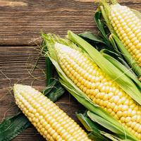 Corn School - Olathe