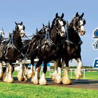 Express Clydesdales Are Back!!!