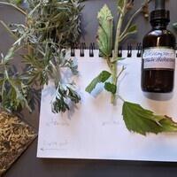 Growing Medicinal Herbs in the Home Garden