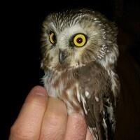 Owl Survey