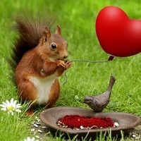 Valentine's Day Squirrel