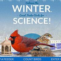 Winter birds citizen science