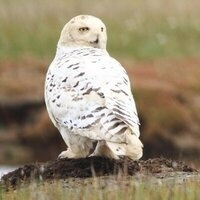 Family Night - Magic of the Snowy Owl