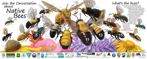 Family Science Saturdays: Bee Bioblitz