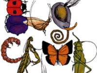 Little Explorers Mini Camp: All About Bugs!
