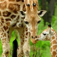 Rhody Adventures - The Bronx Zoo