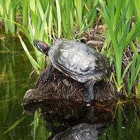 Turtle Pond Talk: Lizzie King
