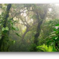 Costa Rica Summer 2020 Internship Info Session