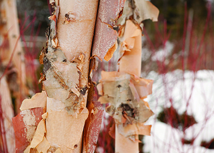 Mindful Winter Nature Walk at Brian C. Nevin Welcome Center