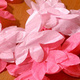 Everlasting Cherry Blossoms / Flores de papel de cereza