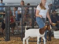 Pee Dee Region 4-H Livestock Clinic - REGISTRATION