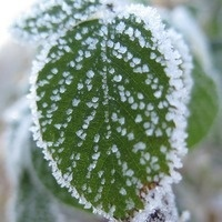 Tiny Tots: Ice and Snow (Tues PM)