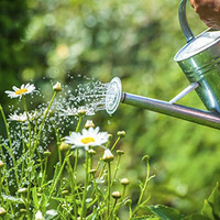 Learn from a Master Gardener: How Does Your Garden Grow?