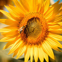 Learn from a Master Gardener: Planting for Pollinators
