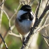Great Backyard Bird Count - Bird Walk