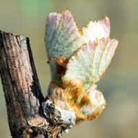6th Annual Southern Oregon Grape Symposium