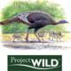 Wild About Turkeys: Educator Workshop