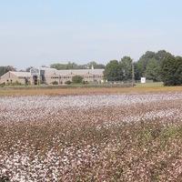 Virtual Cotton Tour Field Day