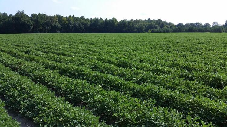 2020 SC Peanut Growers' Meeting