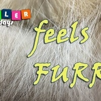 Toddler Tuesday: Feels Furry!