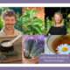 Herbs for Stress, Stamina, Sleep & Relaxation (April - May 2020)