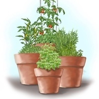 CANCELED - An Introduction to Container Gardening