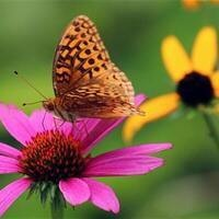 Canceled - Making the Most of Your Piece of Nature-DIY Pollinator Workshop