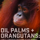 Oil Palms + Orangutans: Forest Conservation in Malaysian Borneo