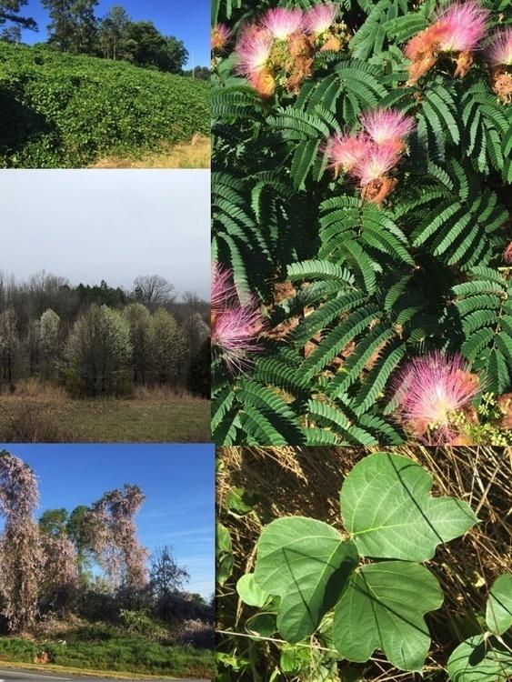 Invasive Species Workshop and Field Tour